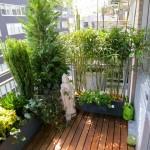 claudia-saez-fromm-patio-chelsea