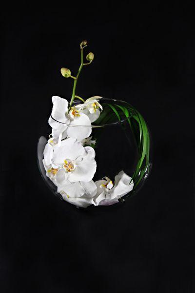 Ovando Orchid Moon